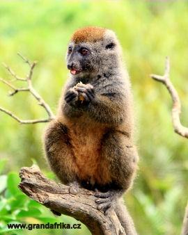 TO NEJLEPŠÍ Z MADAGASKARU 11 DNÍ