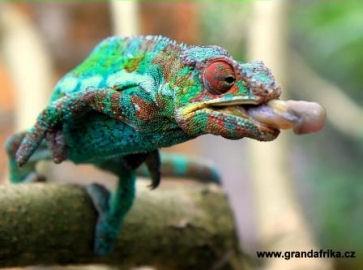 Madagaskar - Zájezd v malé české skupině – max 6 osob