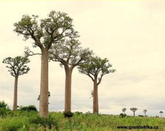 TO NEJLEPŠÍ Z MADAGASKARU - 16 DNÍ PRIVÁTNĚ