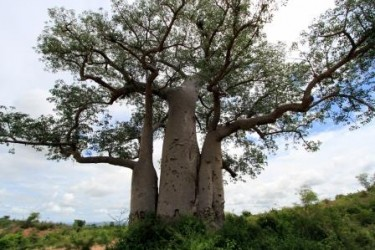 TO NEJLEPŠÍ Z MADAGASKARU 12 DNÍ vč. TSINGY