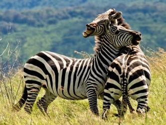 Safari v Africe - zažijte velkou migraci zvířat v Tanzánii a Keni
