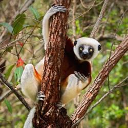 Čím je Madagaskar tak výjimečný?