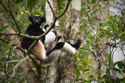 Denník - Madagaskar se zoologem  a filmařem Matejem Dolinayem