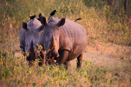 Tipy pro úspěšné safari