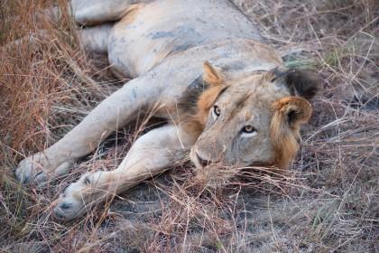 ZAMBIE - KAFUE A SOUTH LUANGWA