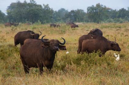 Jak pořídit skvělé wildlife fotografie během Vašeho safari