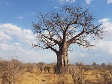 Nejlepší místa v Africe, kam vyrazit na safari!