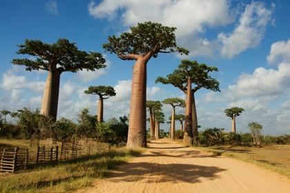 ÚŽASNÍ TVOROVÉ MADAGASKARU S BIOLOGEM A FILMAŘEM MATEJEM
