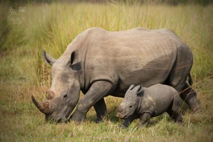 Národní park nebo privátní rezervace? Prozradíme Vám, kde zažijete nejlepší safari!!!