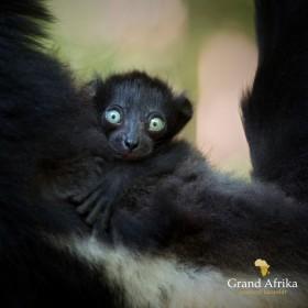 Klienti na Madagaskaru se zoologem a filmařem Matejem Dolinayem
