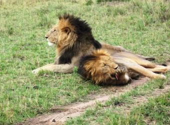 Safari v Tanzanii a odpočinek na Zanzibaru - 12 dní (BUDGET)