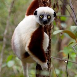TO NEJLEPŠÍ Z MADAGASKARU S ČESKÝM PRŮVODCEM