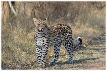 safari v rezervaci Moremi