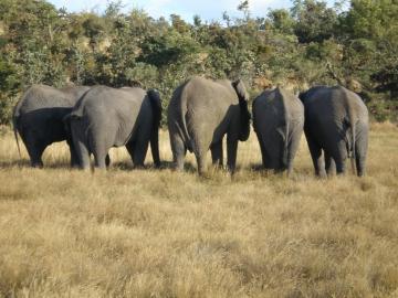Splňte si svůj sen na safari v Africe, Jihoafrická republika, rezervace Entabeni