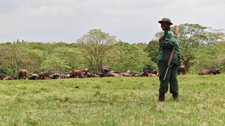 Arusha pěší safari