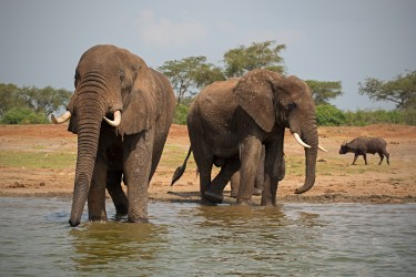 Nový jedinečný zájezd - safari v Tanzanii komfortně s českým průvodcem - biologem, fotografem a filmařem