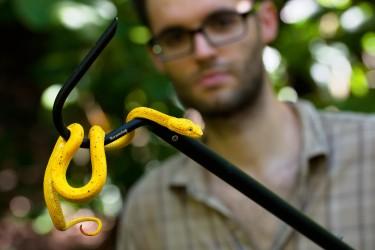 Matej se specializuje na práci s jedovatými hady