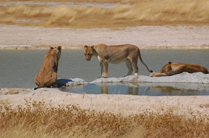 safari v Namibii národní park Etosha