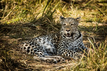 jedinečné safari v Africe s CK Grand Afrika