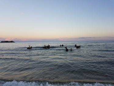 Pavlína Rojík Fulnečková během inspekční cesty v Malawi - plavení koní v jezeře Malawi