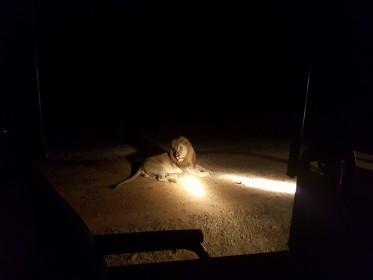 inspekční cesta do národního parku South Luangwa - noční safari