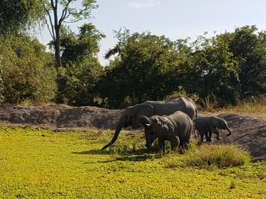 inspekční cesta do národního parku South Luangwa - safari