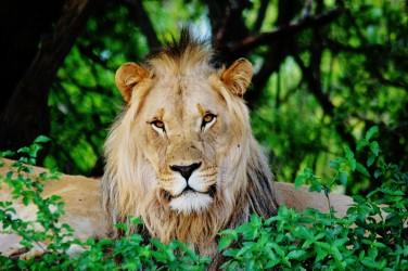 safari entabeni