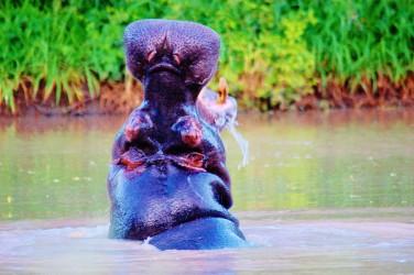 safari jihoafricka republika