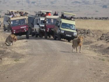 Běžná situace v národním parku - pokud jste nepřijeli jako jedni z prvních, na lva se nepodíváte.