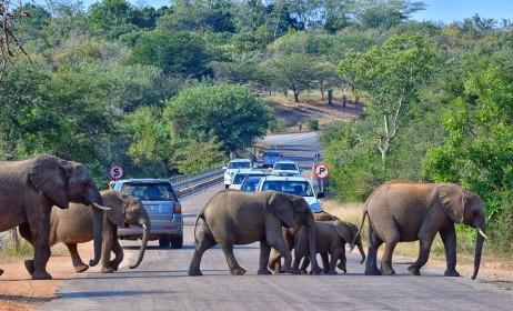 V národních parcích se často u zvířat tvoří doslova kolony.